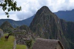 Lama bei Machu Picchu Lizenzfreie Stockfotografie