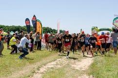 A lama corre em Mudness final, competição atlética em Bucareste Imagens de Stock