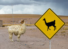 Lama crossing traffic sign, Altiplano, Bolivia Royalty Free Stock Photo