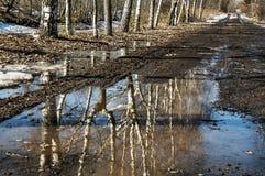 A lama da mola Foto de Stock