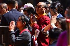 Lama del Tibet Immagine Stock Libera da Diritti