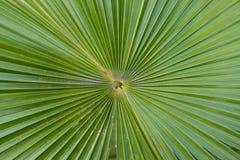 Lama della palma Immagini Stock Libere da Diritti