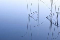 Lama della siluetta dell'erba Fotografia Stock Libera da Diritti