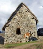 Lama di Machu Picchu Immagini Stock