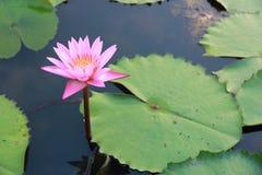 A lama do formulário da flor Fotos de Stock