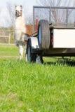 Lama e vaquinha Fotografia de Stock