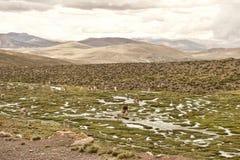 Lama ed alpaga in un campo Fotografia Stock Libera da Diritti