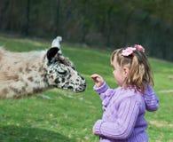 Lama et petite fille photographie stock libre de droits