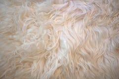 Lama Fur Stock Photo