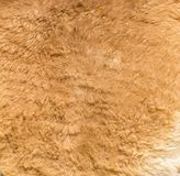 Lama fur as background. Photo of an abstract texture Royalty Free Stock Photo