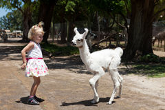 Lama and girl. Two children - lama and girl stock photography