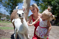Lama and girl Royalty Free Stock Image