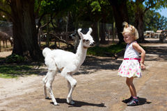 Lama and girl. Two children - lama and girl stock photo