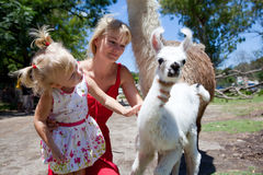 Lama and girl Royalty Free Stock Photography