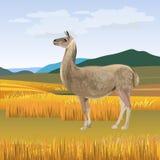 Lama het weiden vector royalty-vrije illustratie