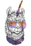 LAMA/llamacorn in den Brillen, Hippie-Artzeichnung, lokalisiert auf Weiß Wenden Sie für Anzeige, Webseitendesign, Plakat, banne e stock abbildung