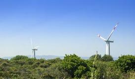 lama maestosa del mulino a vento due nel campo verde con chiaro cielo blu Fotografia Stock Libera da Diritti