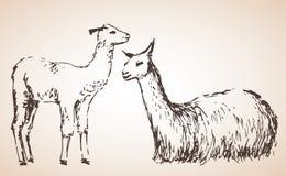 Lama met baby Geïsoleerdj op witte achtergrond Royalty-vrije Stock Foto's