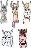 Lama o alpaca lanuginosi adorabili Royalty Illustrazione gratis