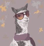 Lama op de de herfstachtergrond in zonnebril en sjaal Stock Foto's