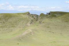 Lama på fältet Arkivfoto