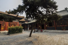 Lama Pekin świątynna porcelana Fotografia Stock