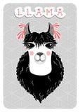 Lama, portrait drôle avec la peau blanche et manteau onduleux noir illustration stock