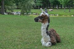 Lama in Quebec. Canada, north America. Lama in Quebec. Canada north America stock image