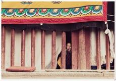 Lama's het bestuderen royalty-vrije stock fotografie
