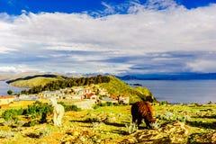 Lama's op isla del Sol door Meer Titicaca - Bolivië Royalty-vrije Stock Foto