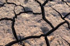 Lama seca Foto de Stock