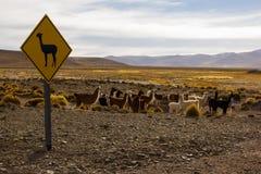 Lama Sign e gruppo di lame Fotografia Stock Libera da Diritti