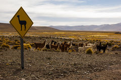 Lama Sign and Group of Lamas Royalty Free Stock Photography