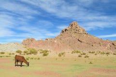 Lama su erba e su rocce Fotografia Stock