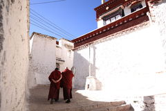 Lama and sunny Monastery Stock Images
