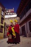 Lama und Hupe Lizenzfreie Stockfotografie