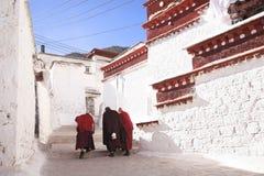 Lama und sonniges Kloster Stockbilder