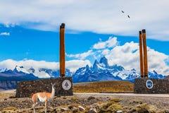 Lamaguanaco nära symboliska kolonner Royaltyfri Fotografi