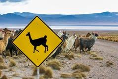 Lamakorsning trafiktecken, Altiplano, Bolivia Royaltyfri Bild