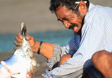 Lamalera whaler cuts mantas on a beach. A whaler from Lamalera village cuts freshly hunted mantas directly on a beach. The meat is then shared among family Royalty Free Stock Image