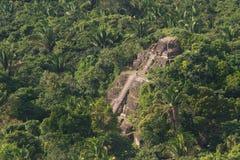 Lamanai, majowie ruiny Obrazy Stock