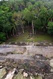 Lamanai Maya Temple Royalty Free Stock Photo