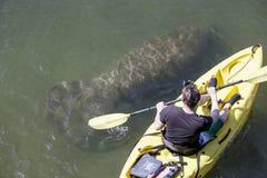 Lamantin et kayaker Photographie stock libre de droits