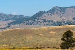 Lamar谷,黄石国家公园,怀俄明,美国 图库摄影