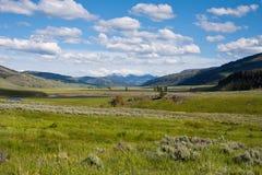 lamar dal yellowstone fotografering för bildbyråer