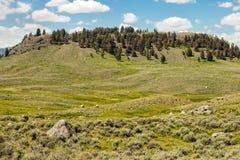 Lamar Valley fotografia stock