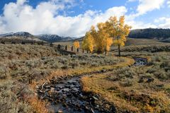 Lamar Valley in the Fall. A beautiful Fall scene in Lamar Valley Royalty Free Stock Photography