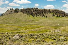 Lamar Valley. And meadow in Yellowstone National Park stock photo