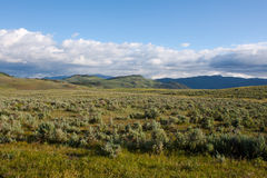 Lamar Valley in Yellowstone Royalty Free Stock Photography