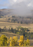 Lamar Valley, Yellowstone National Park in fall. Scenic from Lamar Valley with Buffalo herd and eagle in flight Stock Images